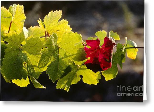 Red Leaf Green Leaf Greeting Card by Craig Lovell
