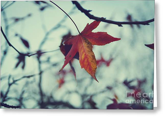 Red Leaf Greeting Card by Jelena Jovanovic