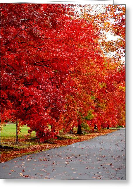 Red Leaf Road Greeting Card