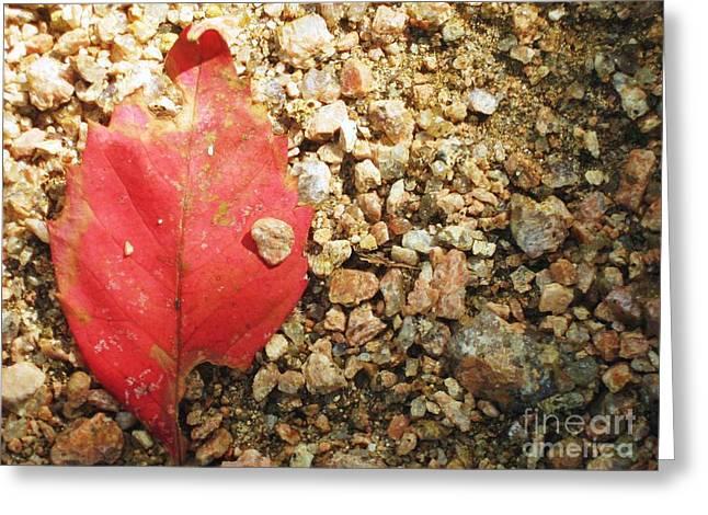 Red Leaf Greeting Card by Venus