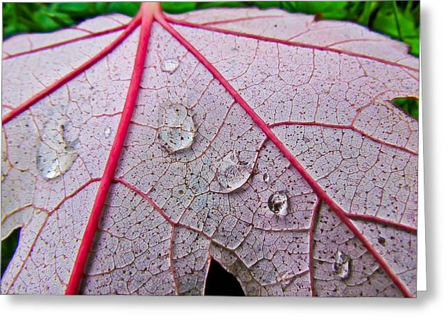 Red Leaf With Raindrops Greeting Card
