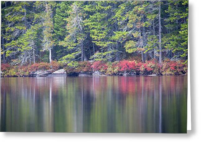 Red Leaved Shrubs Dot A Shoreline Greeting Card by Robbie George