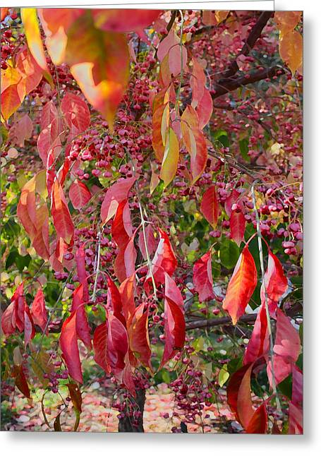 Red Leaves And Berries Greeting Card