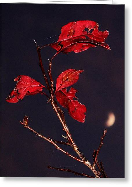 Red Leaves And Fading Moon Greeting Card