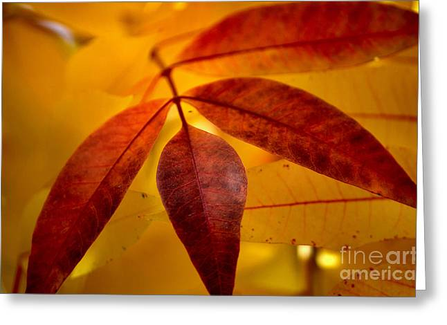 Red Leaves At Dawn Greeting Card by Deb Halloran
