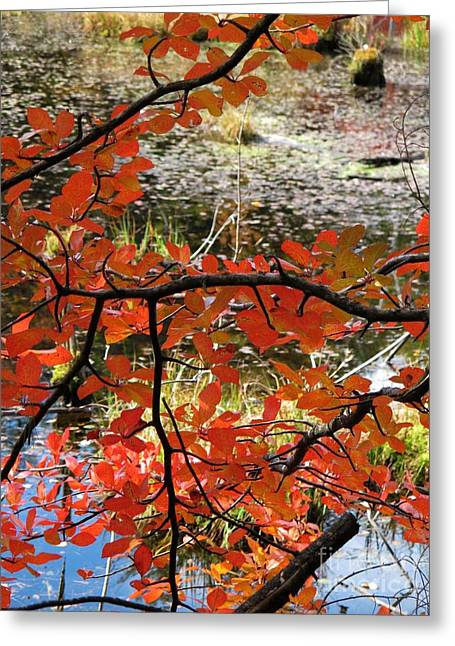 Red Leaves By The Pond Greeting Card by Linda Marcille