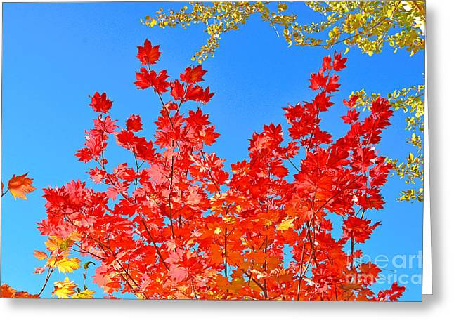 Greeting Card featuring the photograph Red Leaves by David Lawson