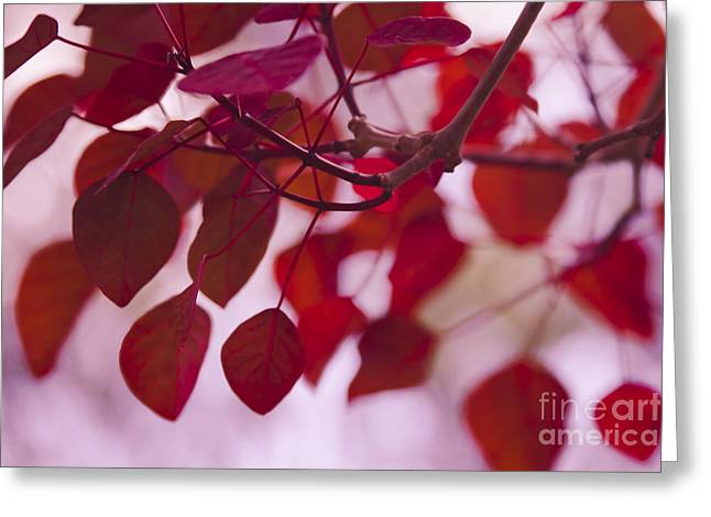Red Leaves - Euphorbia Cotinifolia - Tropical Smoke Bush Greeting Card
