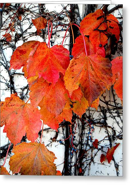 Red Leaves Of Fall Greeting Card