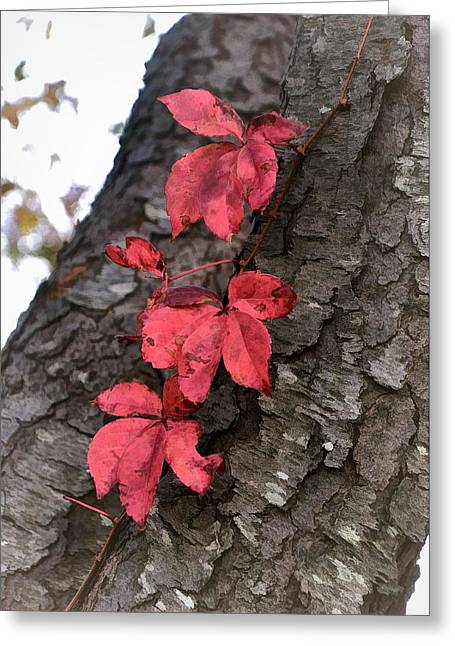 Red Leaves On Bark Greeting Card