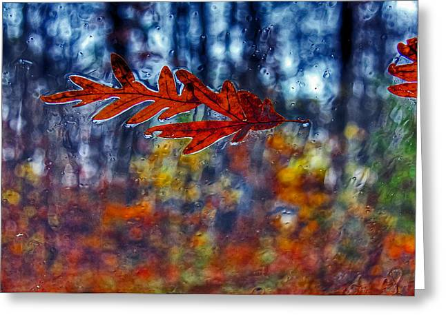 red leaves on windshield Dry Brush Greeting Card by Andy Lawless