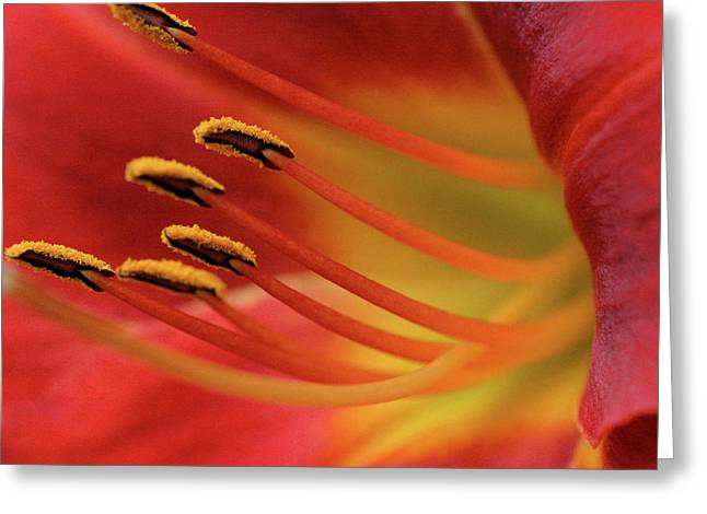 Red Lily Abstract Greeting Card