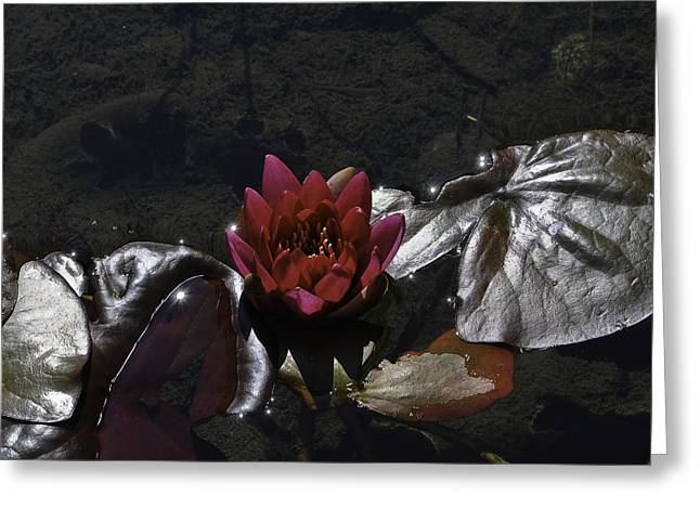 Red Lily On Silver Throne Greeting Card