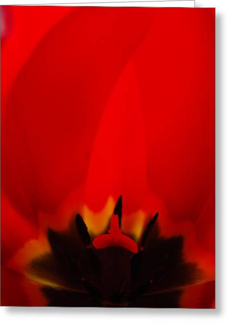 Red Lips Greeting Card by Jani Freimann