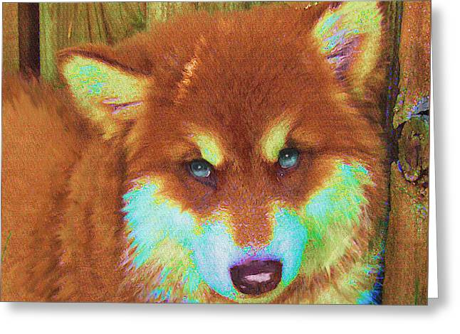 Red Malamute Greeting Card by Jane Schnetlage