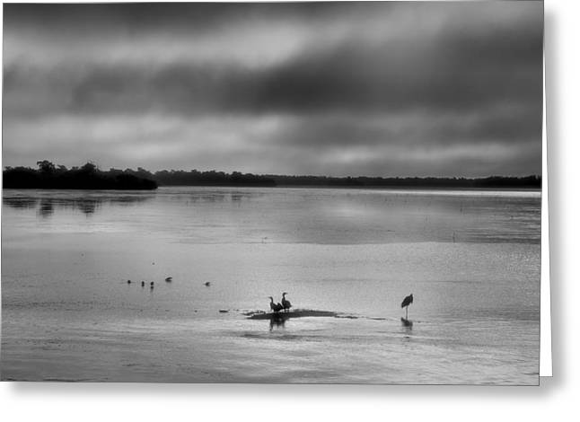 Red Mangrove Marsh II Greeting Card by Steven Ainsworth