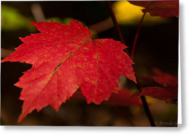 Red Maple Leaf In Fall Greeting Card