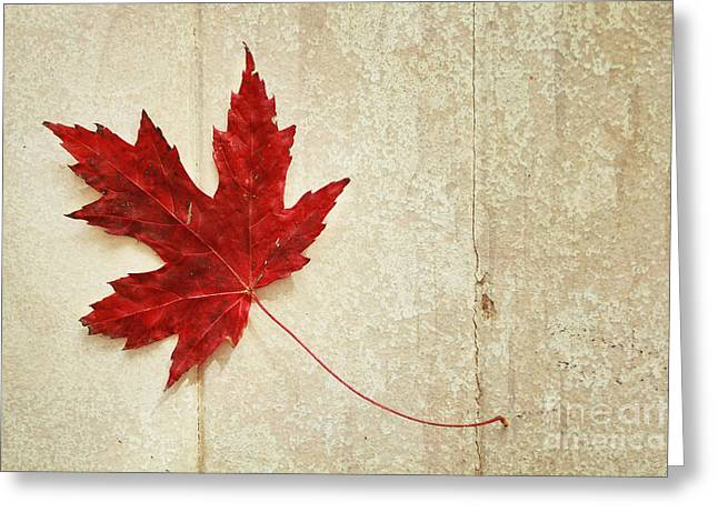 Red Maple Leaf Greeting Card by Isabel Poulin