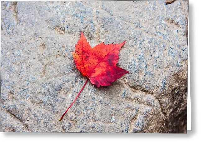 Red Maple Leaf On Granite Stone In Horizontal Format Greeting Card by Karen Stephenson