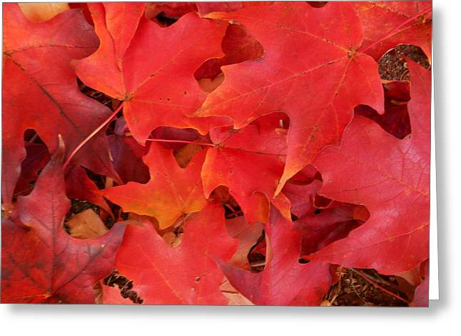 Red Maple Leaves Carpeting The Ground Greeting Card