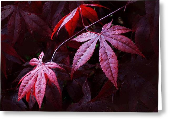 Red Maple Trio Greeting Card