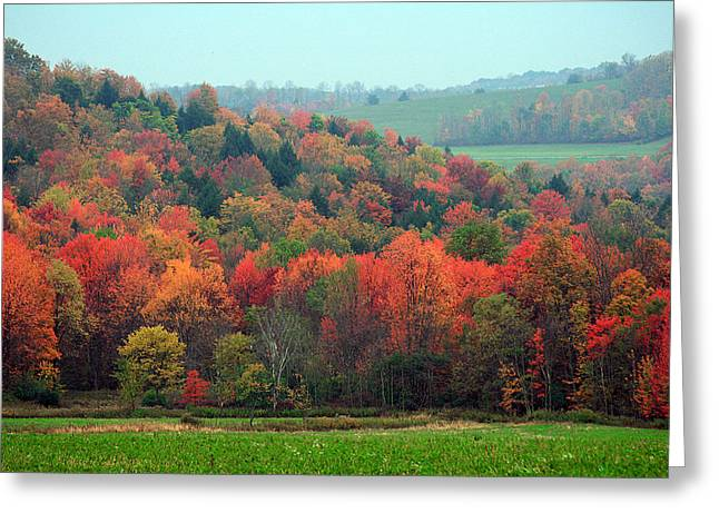 Red Maples Greeting Card