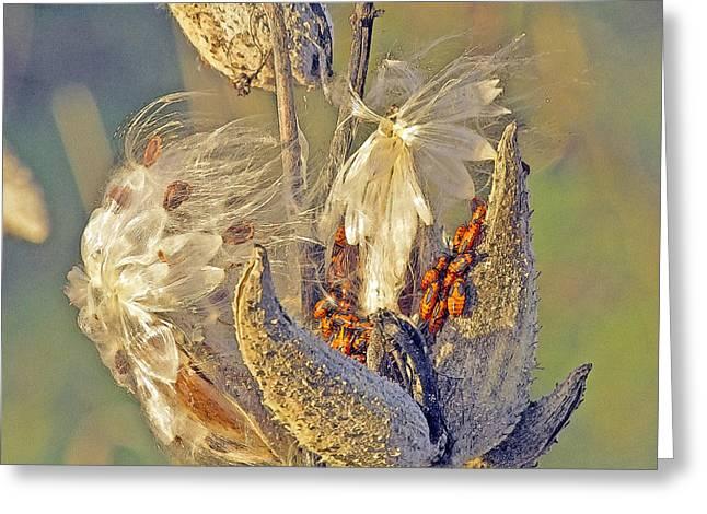 Red Milkweed Beetles Greeting Card by Constantine Gregory