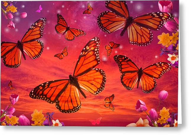 Red Monarch Sunrise Greeting Card by Alixandra Mullins