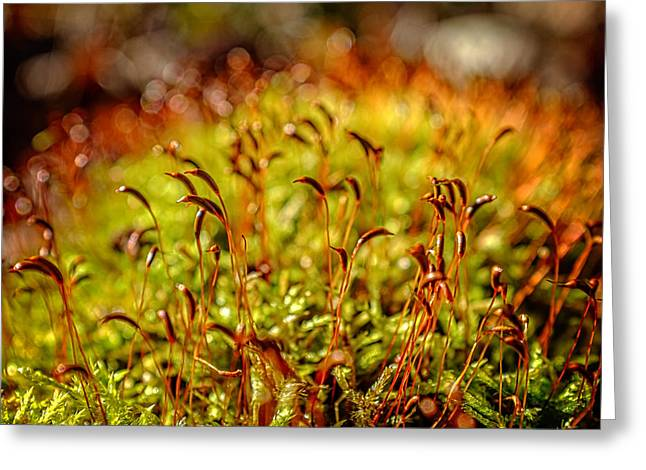 Red Moss Capsules Greeting Card by Chris Bordeleau
