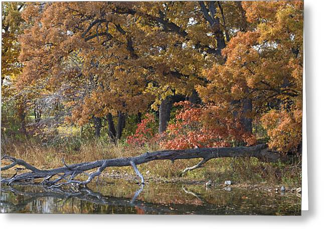 Red Oaks On The Shore Greeting Card