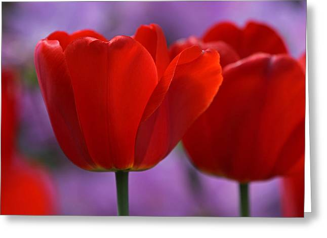 Red On Pink Greeting Card by Juergen Roth