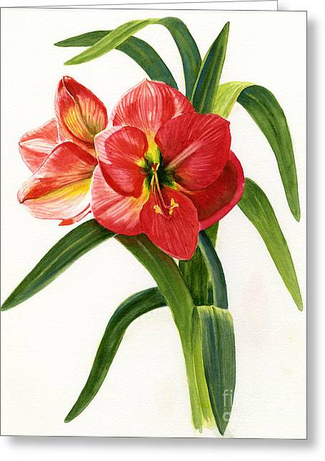 Red-orange Amaryllis Greeting Card by Sharon Freeman