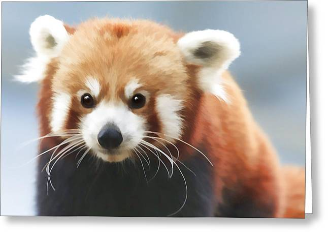 Red Panda Staring Greeting Card