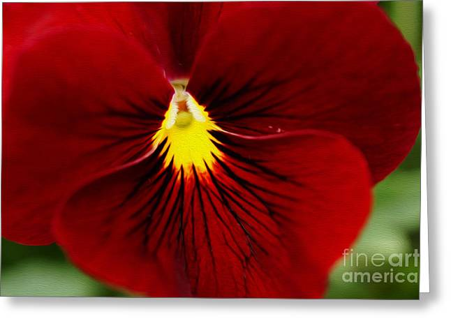 Red Pansy Greeting Card by Nur Roy
