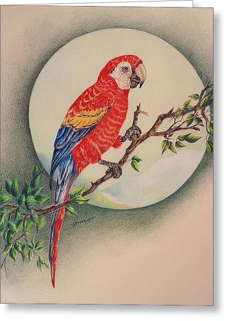 Greeting Card featuring the drawing Red Parrot by Ethel Quelland
