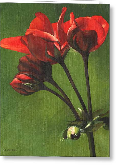 Red Pelargonium Greeting Card by Alecia Underhill