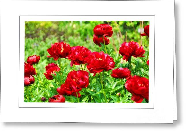Red Peonis Greeting Card by Elaine Manley