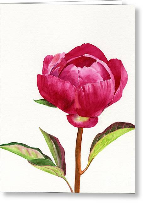 Red Peony With Leaves Greeting Card