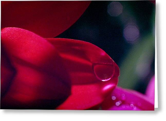 Greeting Card featuring the photograph Red Petal by Mark Greenberg