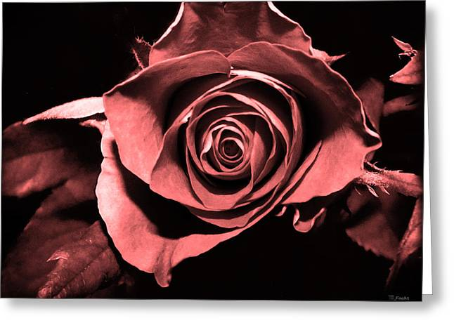 Red Pink Rose  Greeting Card