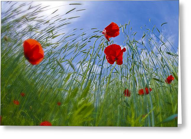 Red Poppies And Blue Sky Greeting Card by Melanie Viola