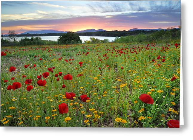 Red Poppies At Sunset Greeting Card by Guido Montanes Castillo