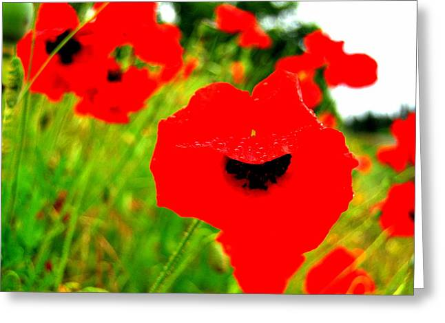 Red Poppies Greeting Card by Mamie Gunning