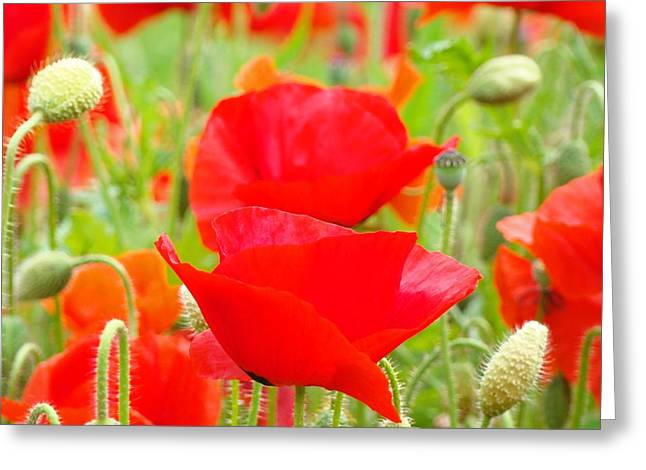 Red Poppy Flowers Art Prints Floral Greeting Card by Baslee Troutman