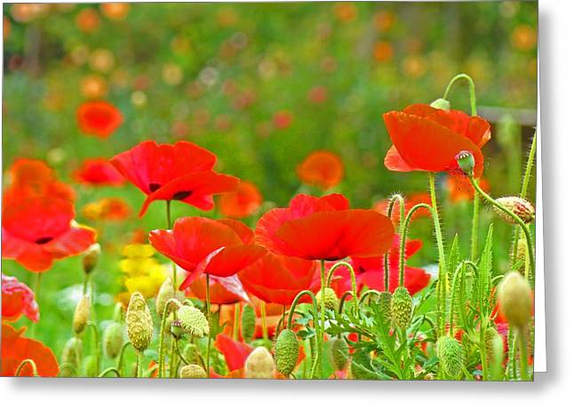 Red Poppy Flowers Meadow Art Prints Greeting Card by Baslee Troutman