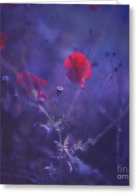 Red Poppy In Blue Medium Format Analog Hasselblad Film Photo Greeting Card by Edward Olive