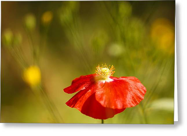 Red Poppy With Weeds Greeting Card
