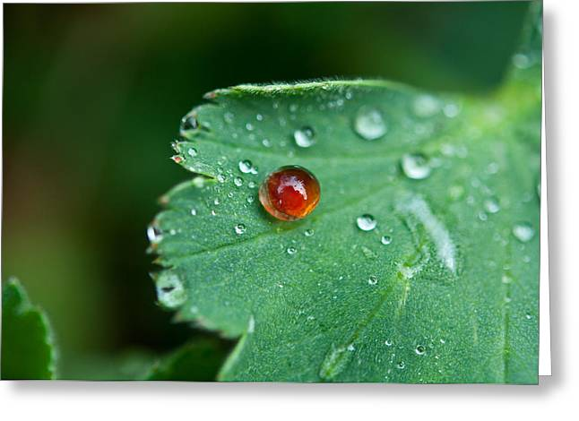 Greeting Card featuring the photograph Red Rain Drop by Sabine Edrissi