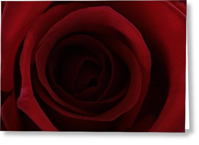 Greeting Card featuring the photograph Red Red Rose by Keith Hawley
