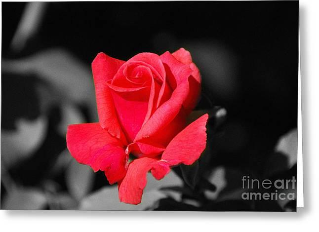 Red Red Rose - Sc Greeting Card